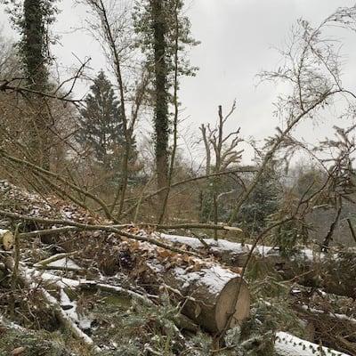 Die Folgen des Klimawandels im Bergpark Wilhelmshöhe (Führung)